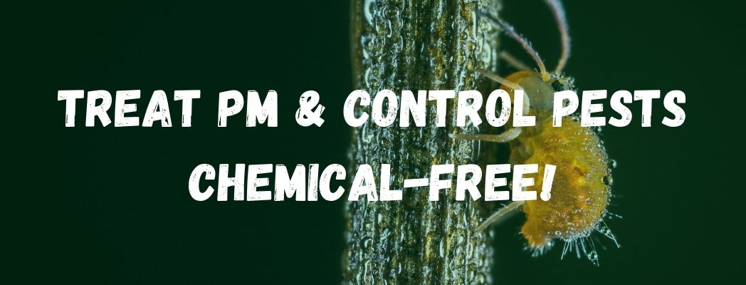 Treat PM and Control Pests Chemical-Free