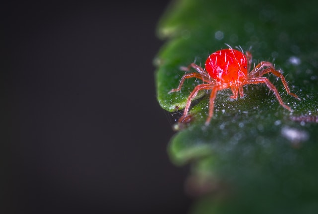 spider mites - treat PM and control pests