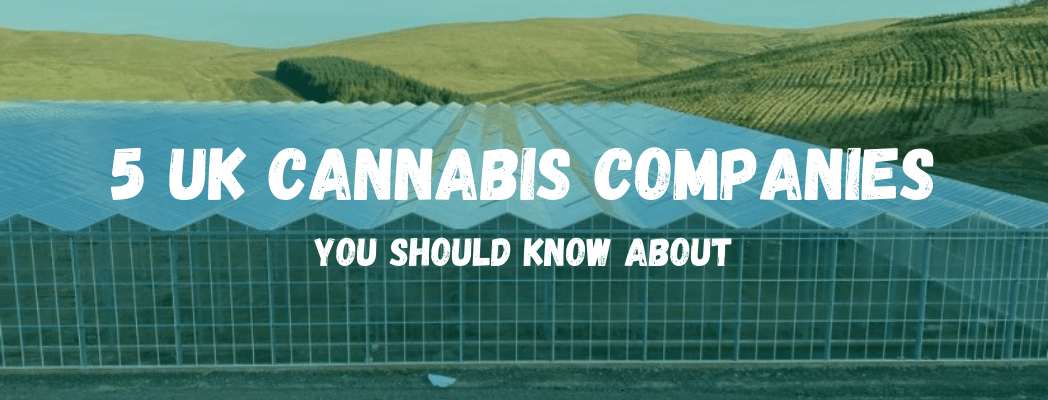 5 Medical Cannabis Companies You Should Know About